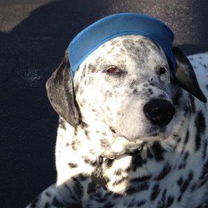 My dog Sparkplug